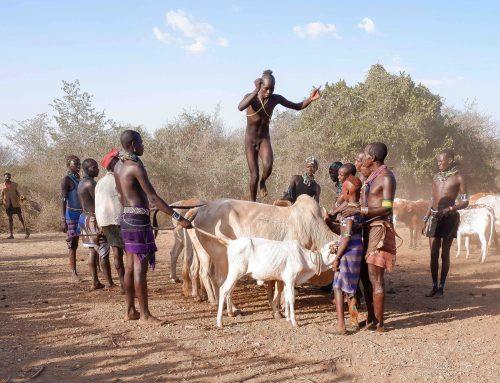 Bull jumping ceremoni